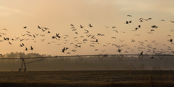 lakelandbirds-16