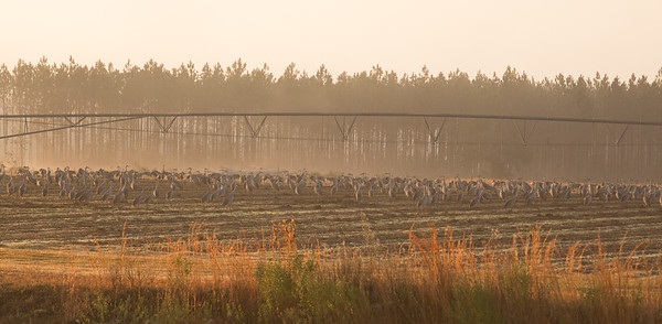 lakelandbirds-13