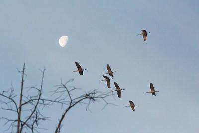 lakelandbirds-3