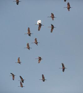 lakelandbirds-2