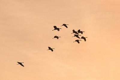 lakelandbirds-7