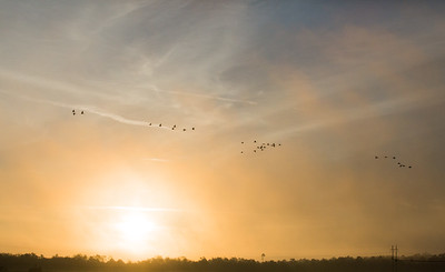 lakelandbirds-18
