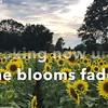 SunflowerpromoLJPsouthern