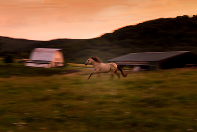 Headed to the barn.  #horse #canaanvalleywv #blackbearresort #sunset #motionblur #canon6d #photobytodd #wildwonderfulwv #pony #running #pasture #barns #farmlife #farm #country