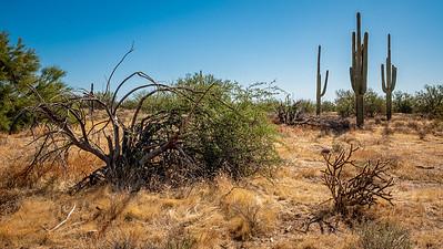 110119_6030_Scottsdale AZ