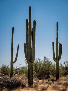 110119_5877_Scottsdale AZ
