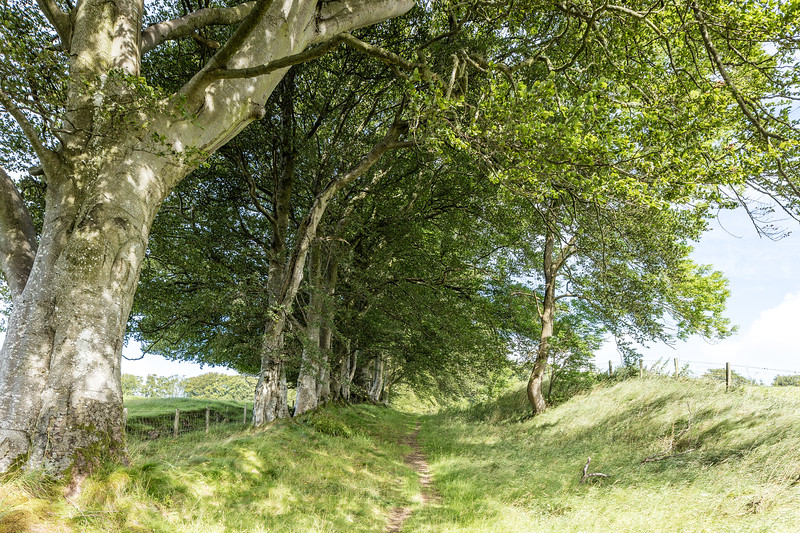 Path from Kitleyknowe - once an entrance to Newhall