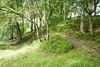 Path through Craigie