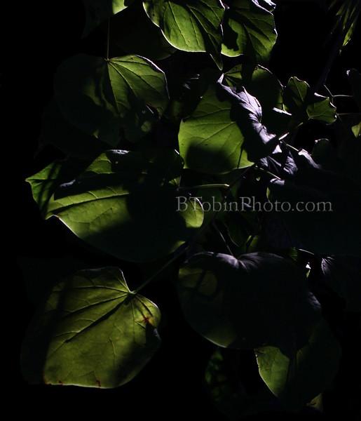 BTobinPhoto, Brian Tobin Photography