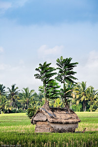 Rice field hut, Ubud, Bali