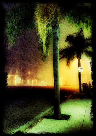 Cloak and Daggers Fog and palm trees at night San Diego, CA