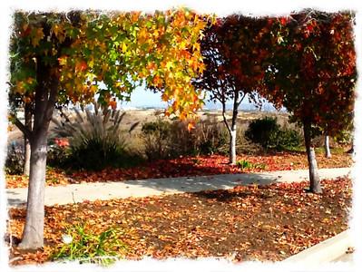 Enchanting Foliage Autumn in SoCal San Diego, CA