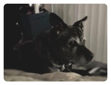 Max - Best Dog Faithful Canine San Diego, CA