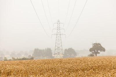Electric wheat