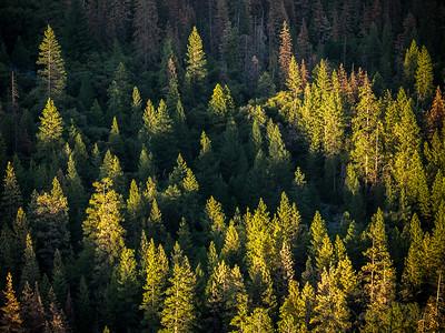 Yosemite-017