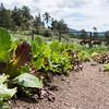 MacGregor Ranch Garden