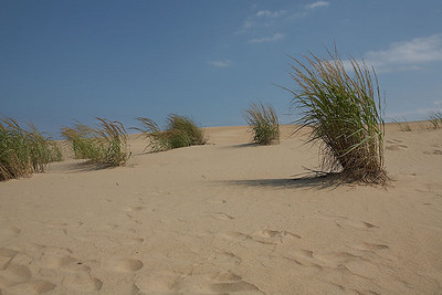 Sand and shrubs at Jockey's Ridge State Park.
