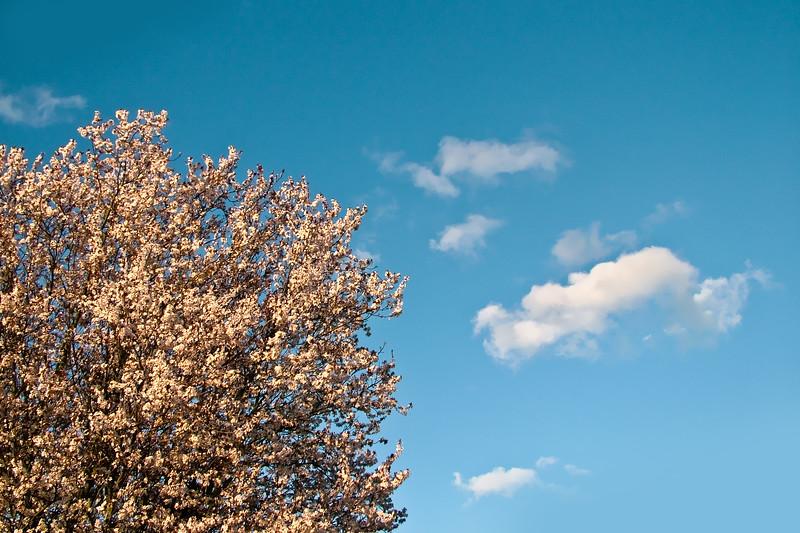 Blossom & Clouds