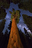 Milky Way and General Sherman Tree - Giant Sequoia