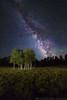 Galactic Aspens