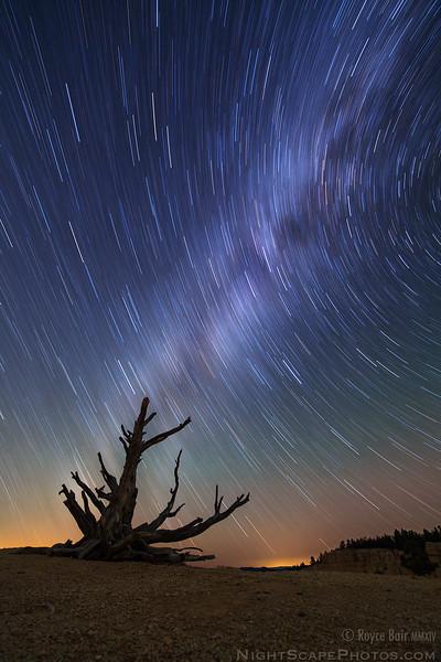 Milky Way Star Trails behind Old Bristlecone Pine