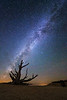Milky Way stars behind Old Bristlecone Pine