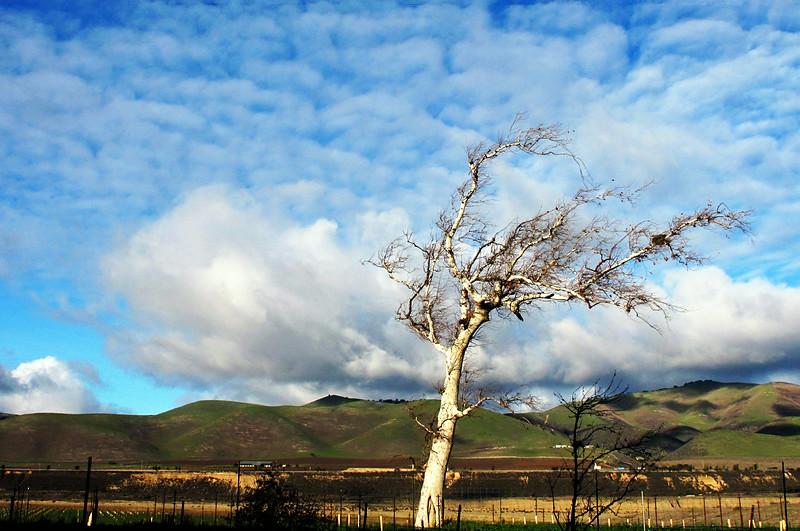 """""""Californian Dream"""" (Santa Maria, CA - 2010)"""