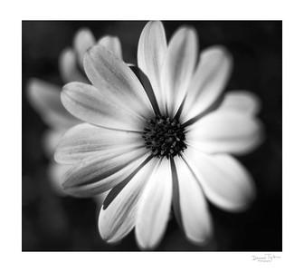 Flower_O9A6281
