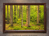 """<i>""""Grow Towards the Light""""</i> ~ Last rays of sunlight coming into the Sacred Grove (near sunset). This is a pre-printed, ready-to-hang, framed print (30"""" x 20"""" with UV-anti-fade-anti-glare lamination, simulated cherry wood frame, with hanging wire & hanging hardware). FRAMED PRICE is $136.00 + tax. PRINT ONLY PRICE is $54.00 + tax. To purchase, call 801-569-0922 or 801-558-2701, or email to RoyceBairPhoto@gmail.com — <u>Do NOT order this pre-made print via the above online """"Buy"""" button</u>. To order custom size prints of this image (takes one to two weeks), <a href=""""http://roycebair.smugmug.com/Personal-Work/Sacred-Grove/6588918_ZzngLj#!i=426713722&k=56SCScC"""">click here</a>."""