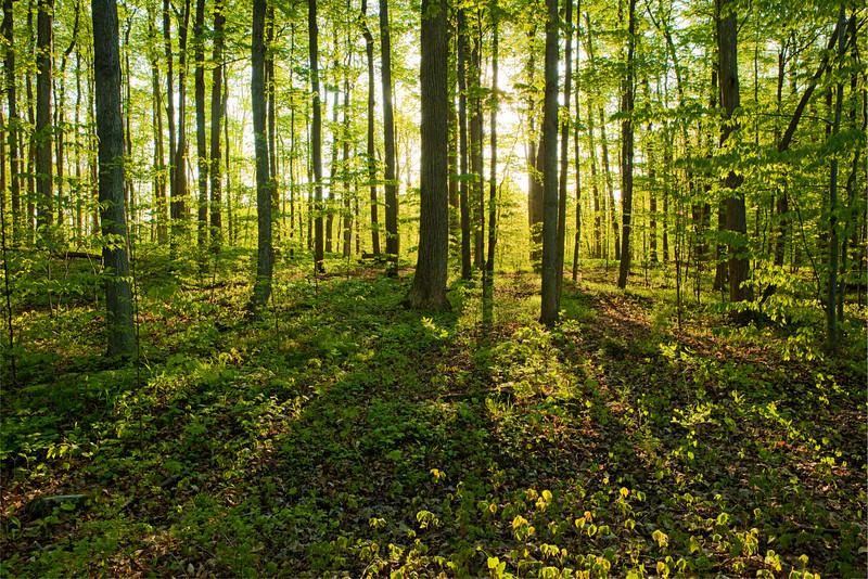Sacred Grove - © Royce Bair