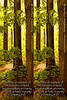 "The Sacred Grove - LDS 2009 Mutual Theme bookmarks - designed to make two 2x6-inch markers from a 4x6-inch print (choose ""lustre"" finish). You must cut print in half to make your bookmarks."