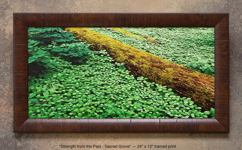 "<i>""Strength from the Past""</a> ~ Ground cover on the forest floor of the Sacred Grove. This is a pre-printed, ready-to-hang, framed print (24"" x 12"" with UV-anti-fade-anti-glare lamination, simulated cherry wood frame). FRAMED PRICE is $81.00 + tax. PRINT ONLY PRICE is $21.00 + tax. To purchase, call 801-569-0922 or 801-558-2701, or email to RoyceBairPhoto@gmail.com — To order custom size prints of this image (takes one to two weeks), <a href=""http://roycebair.smugmug.com/Personal-Work/Sacred-Grove/6588918_ZzngLj#!i=425536222&k=Dhp3smZ"" rel=""nofollow"">click here</a>."