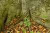 "Plants growing around the trunk of a tree in the Sacred Grove, near Palmyra, New York. To ORDER custom size prints of this image (takes one to two weeks), click on the ""Buy"" above this image (choose ""This Photo"" from the drop-down menu). You have your choice of glossy, luster, and metallic photographic paper prints, <a href=""http://www.smugmug.com/prints/giclee-canvas-watercolor"">Giclée Watercolor</a> prints, <a href=""http://www.smugmug.com/prints/giclee-canvas-watercolor"">Giclée Canvas</a> prints, <a href=""http://www.smugmug.com/prints/thinwraps"">ThinWraps</a> prints, and <a href=""http://www.smugmug.com/prints/metalprints"">Metal</a> prints. All custom prints are made by the professional people at <a href=""http://bayphoto.com/"" target=""_blank"">Bay Photo Lab</a>, and shipped directly to you."