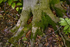"Moss growing around a tree trunk in the Sacred Grove, near Palmyra, New York. To ORDER custom size prints of this image (takes one to two weeks), click on the ""Buy"" above this image (choose ""This Photo"" from the drop-down menu). You have your choice of glossy, luster, and metallic photographic paper prints, <a href=""http://www.smugmug.com/prints/giclee-canvas-watercolor"">Giclée Watercolor</a> prints, <a href=""http://www.smugmug.com/prints/giclee-canvas-watercolor"">Giclée Canvas</a> prints, <a href=""http://www.smugmug.com/prints/thinwraps"">ThinWraps</a> prints, and <a href=""http://www.smugmug.com/prints/metalprints"">Metal</a> prints. All custom prints are made by the professional people at <a href=""http://bayphoto.com/"" target=""_blank"">Bay Photo Lab</a>, and shipped directly to you."