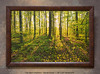 """<i>""""The Spirit Enlightens""""</i> ~ Morning sunlight through the trees in the Sacred Grove. A sunrise in early May. This is a pre-printed, ready-to-hang, framed print (30"""" x 20"""" with UV-anti-fade-anti-glare lamination, simulated cherry wood frame, with hanging wire & hanging hardware). FRAMED PRICE is $136.00 + tax. PRINT ONLY PRICE is $54.00 + tax. To purchase, call 801-569-0922 or 801-558-2701, or email to RoyceBairPhoto@gmail.com — <u>Do NOT order this pre-made print via the above online """"Buy"""" button</u>. To order custom size prints of this image (takes one to two weeks), <a href=""""http://roycebair.smugmug.com/Personal-Work/Sacred-Grove/6588918_ZzngLj#!i=1128386519&k=D6GF5cG"""">click here</a>."""