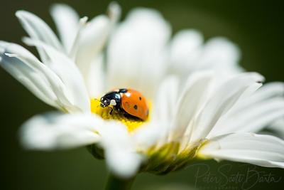 ladybug-002