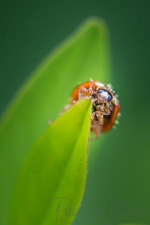 ladybug-006