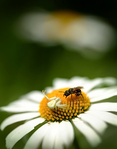 Spider vs Bee 2004