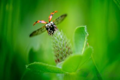ladybug-001