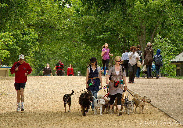 Day One - May 15, 2013 - Dog walkers and joggers.