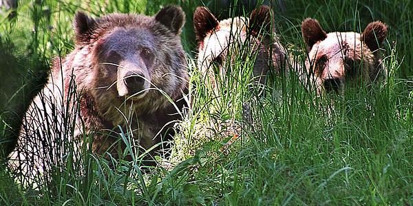 Bear Family, WY,  2001