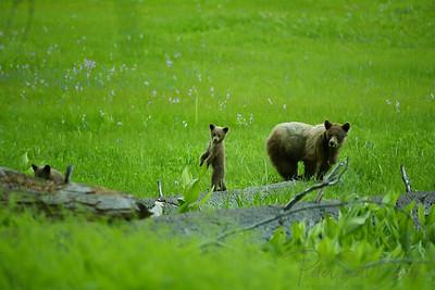 Bear Family, CA, 2003