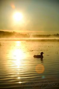 Loon Sunrise, 2004