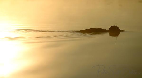 Fishing 100, 2004