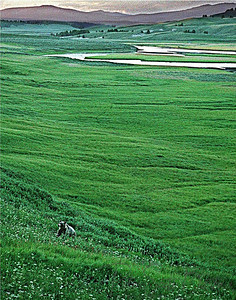 Bear Scenery, WY, 2001