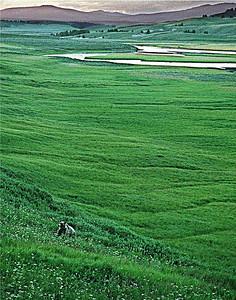 Bear Scenery, WY, 2001