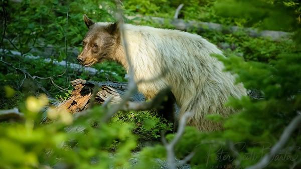 White Bear, 2005