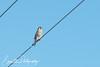 201301-Birds03-0015