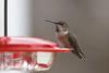 201211-Humming_Bird-0012