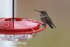 201211-Humming_Bird-0002